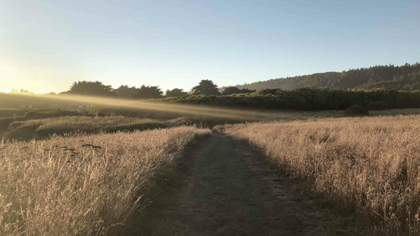 The Sea Ranch Trail Landscape by Kerry Mansfield